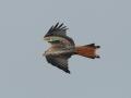 Ein Vogel aus dem Flügelmarkierungsprogramm. Foto: C. Gelpke